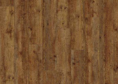 maritime-pine-24854